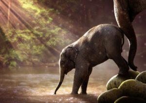 mentor_elephant